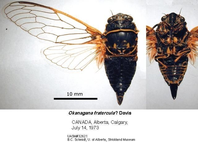 http://entomology.museums.ualberta.ca/searching_species_details.php?s=4216