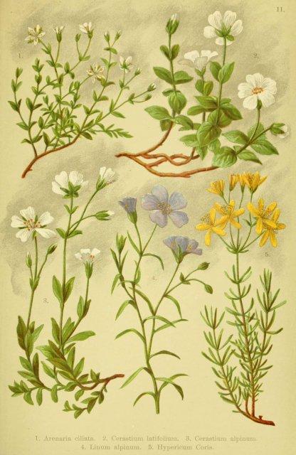https://www.flickr.com/photos/biodivlibrary/6021501993/