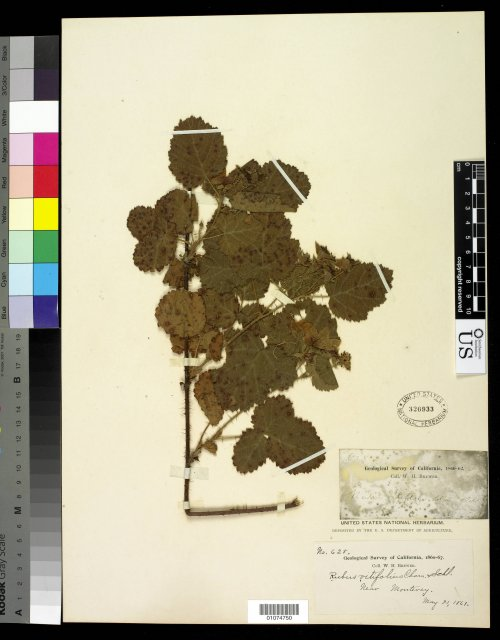 http://collections.mnh.si.edu/search/botany/?irn=10817480