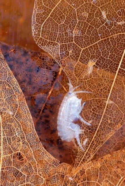 http://www.biolib.cz/en/image/id25425/