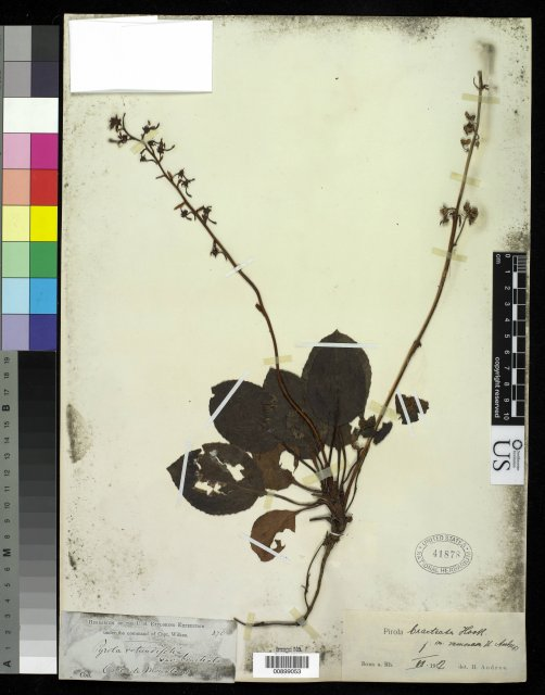 http://collections.mnh.si.edu/search/botany/?irn=10061685