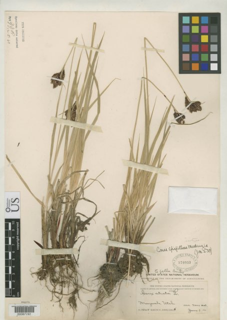 http://collections.mnh.si.edu/search/botany/?irn=2099583