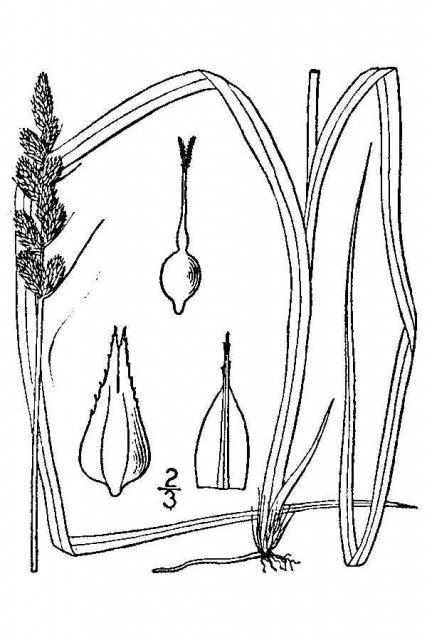 http://plants.usda.gov/java/largeImage?imageID=case22_001_avd.tif