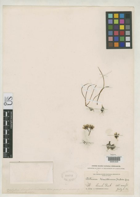 http://collections.mnh.si.edu/search/botany/?irn=2085659