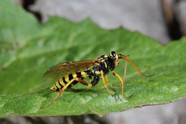 http://www.biopix.com/banchus-sp-banchus-sp_photo-43498.aspx