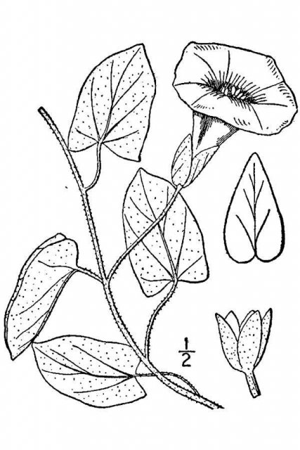 http://plants.usda.gov/java/largeImage?imageID=core5_001_avd.tif