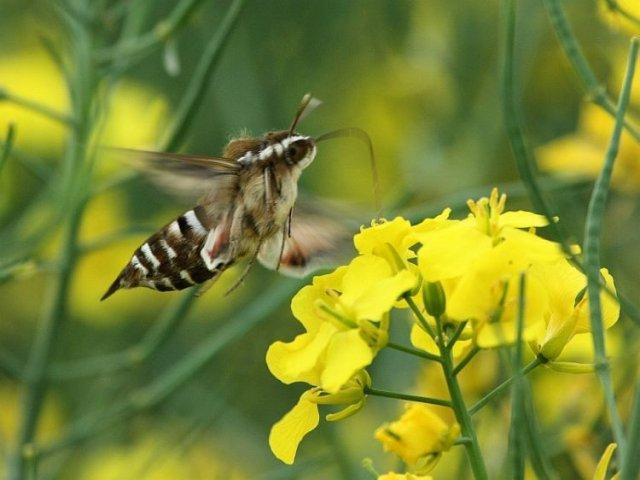 http://www.biolib.cz/en/image/id93833/