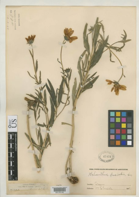 http://collections.mnh.si.edu/search/botany/?irn=2141806