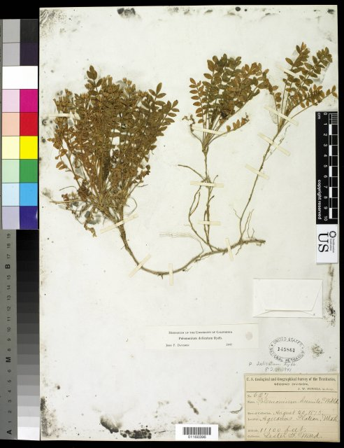http://collections.mnh.si.edu/search/botany/?irn=10818585