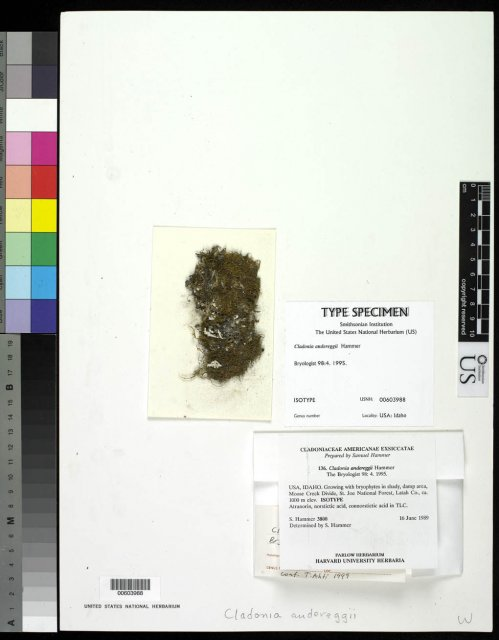 http://collections.mnh.si.edu/services/media.php?env=botany&irn=10091564