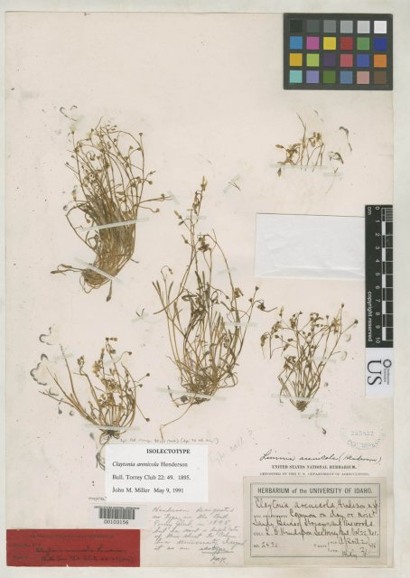http://collections.mnh.si.edu/search/botany/?irn=10077250