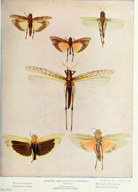 http://www.flickr.com/photos/biodivlibrary/6276410893/