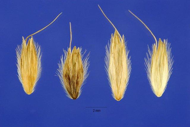 http://plants.usda.gov/gallery/large/alpr3_003_lhp.jpg