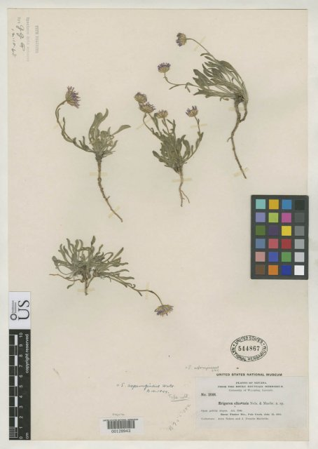 http://collections.mnh.si.edu/search/botany/?irn=2109927