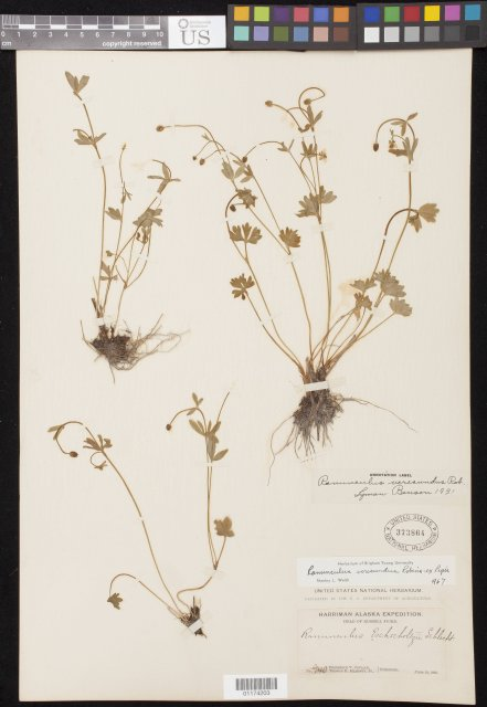 http://collections.mnh.si.edu/search/botany/?irn=10803131