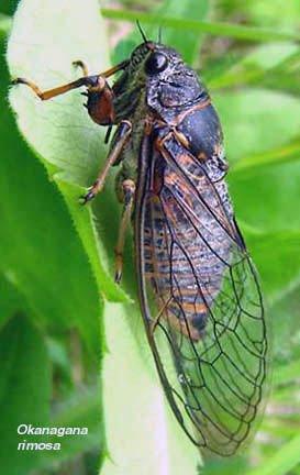 http://eolspecies.lifedesks.org/node/1441