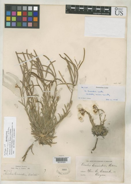 http://collections.mnh.si.edu/services/media.php?env=botany&irn=10127553