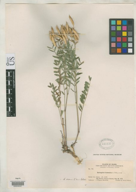 http://collections.mnh.si.edu/services/media.php?env=botany&irn=10104471