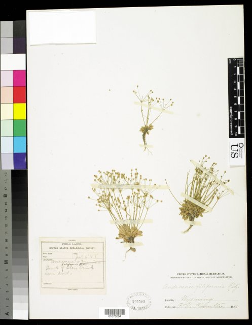 http://collections.mnh.si.edu/search/botany/?irn=10816548
