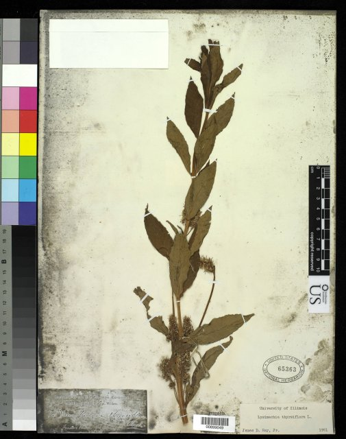 http://collections.mnh.si.edu/services/media.php?env=botany&irn=10214802