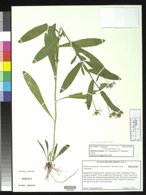 http://collections.mnh.si.edu/services/media.php?env=botany&irn=10136376