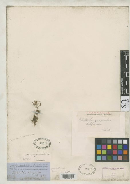 http://collections.mnh.si.edu/services/media.php?env=botany&irn=10087846