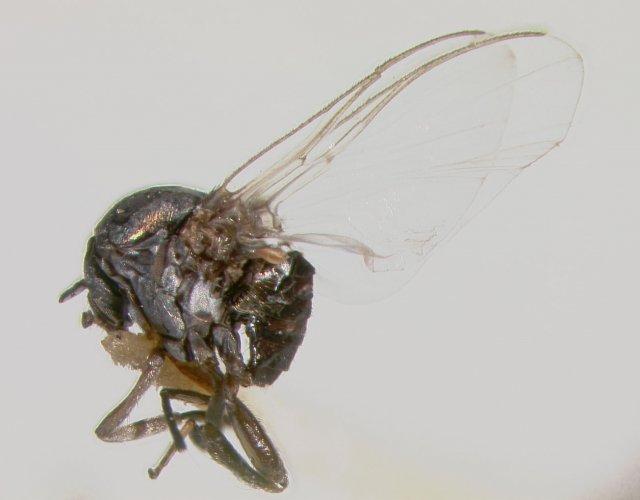 http://simuliidae.lifedesks.org/node/28