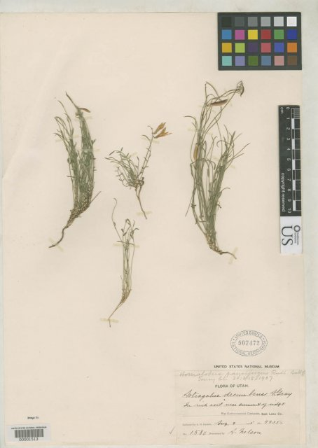 http://collections.mnh.si.edu/search/botany/?irn=2109439
