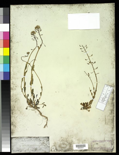 http://collections.mnh.si.edu/search/botany/?irn=10058342