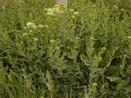 http://www.bioimages.org.uk/vfg/MWSt/Nikon950/2003/03-04/03-04-24/03D24D_1.jpg