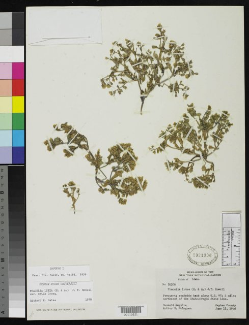 http://collections.mnh.si.edu/search/botany/?irn=2087944