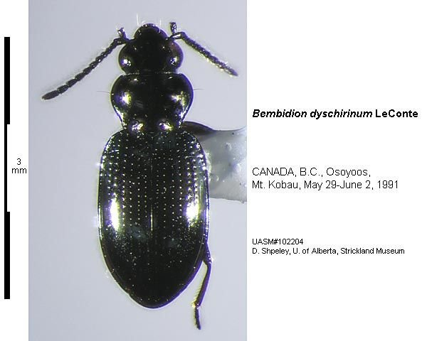 http://entomology.museums.ualberta.ca/searching_species_details.php?s=4818