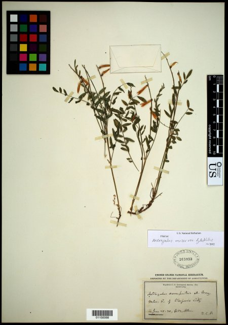 http://collections.mnh.si.edu/search/botany/?irn=10592336