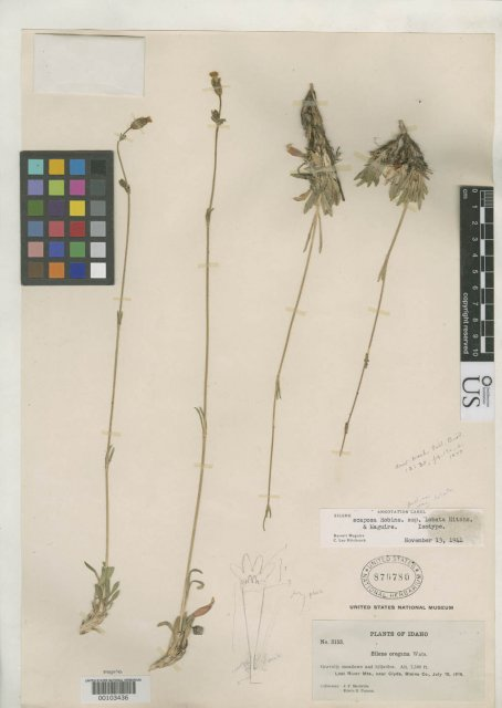 http://collections.mnh.si.edu/search/botany/?irn=2154547