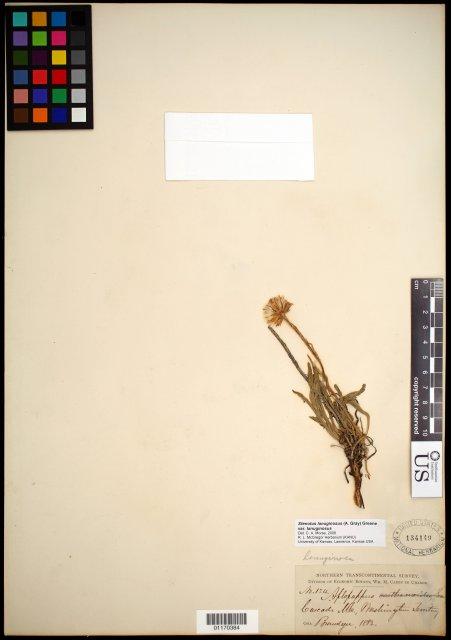 http://collections.mnh.si.edu/search/botany/?irn=10767235