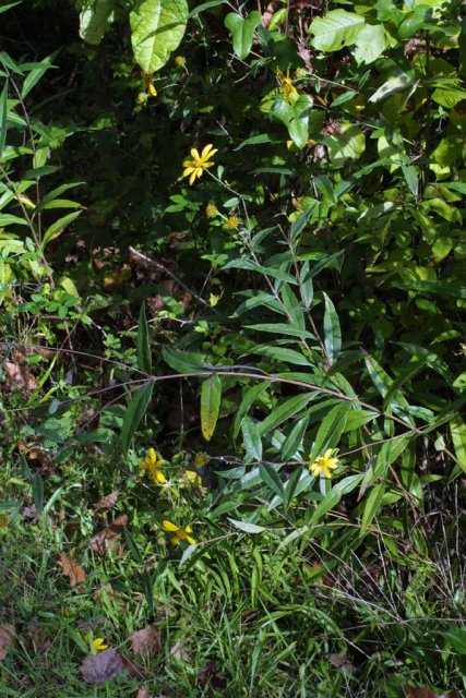 http://bioimages.vanderbilt.edu/gq/baskauf/gheeg--wp38346.jpg