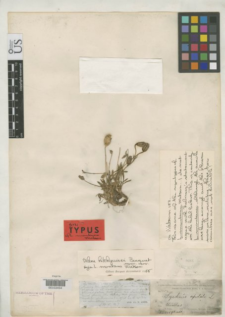 http://collections.mnh.si.edu/search/botany/?irn=2156584