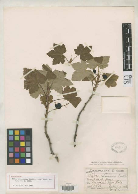 http://collections.mnh.si.edu/search/botany/?irn=2126622