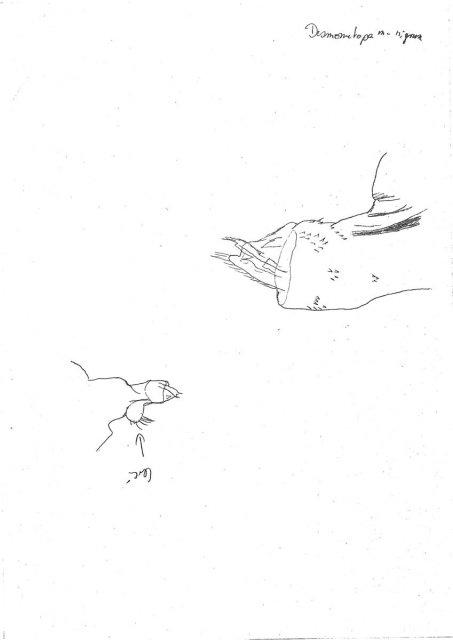 http://milichiidae.info/file/4135