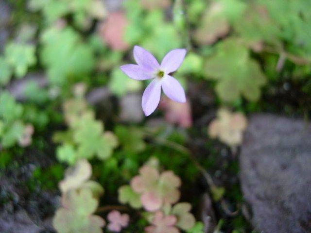 http://calphotos.berkeley.edu/imgs/512x768/0000_0000/0912/0851.jpeg