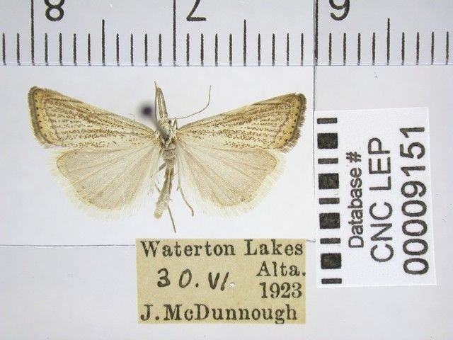 http://entomology.museums.ualberta.ca/searching_species_details.php?s=2865