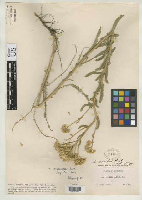 http://collections.mnh.si.edu/search/botany/?irn=2146125