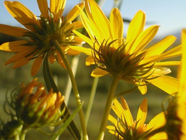 http://calphotos.berkeley.edu/imgs/512x768/0000_0000/0804/0329.jpeg