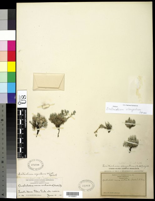 http://collections.mnh.si.edu/search/botany/?irn=10819087