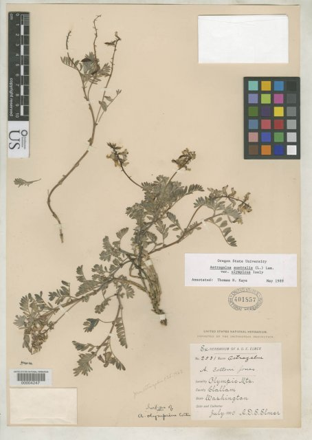 http://collections.mnh.si.edu/services/media.php?env=botany&irn=10112364