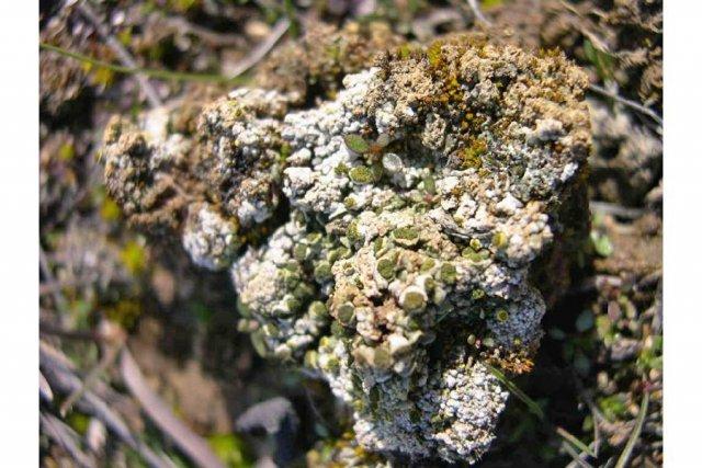 http://plants.usda.gov/java/largeImage?imageID=tesa_002_ahp.jpg