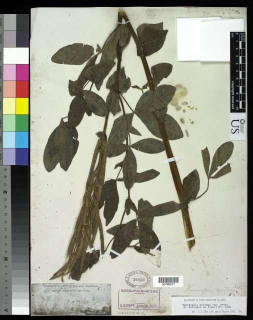 http://collections.mnh.si.edu/search/botany/?irn=10059538