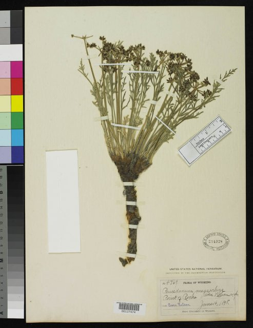 http://collections.mnh.si.edu/services/media.php?env=botany&irn=10068829