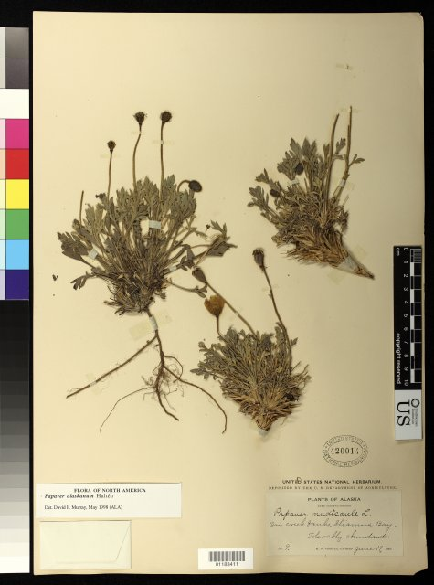 http://collections.mnh.si.edu/search/botany/?irn=10888780