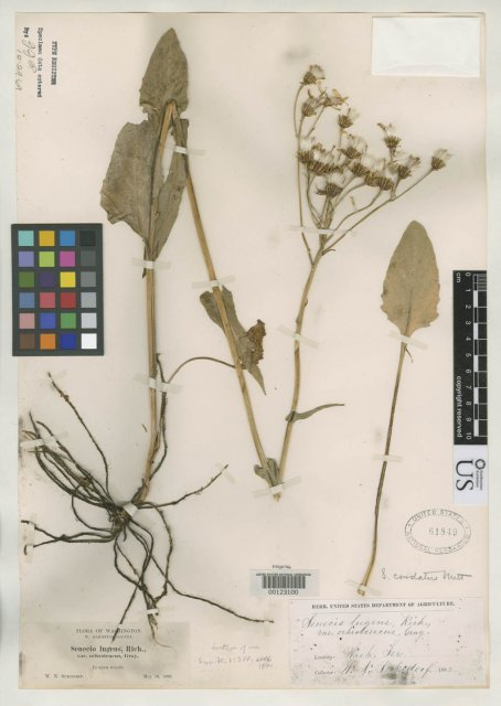 http://collections.mnh.si.edu/search/botany/?irn=2129030